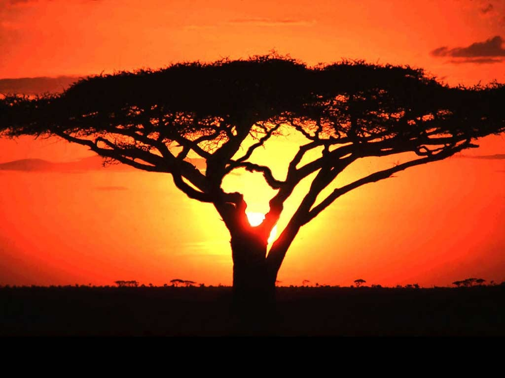 .AFRICA domännamn