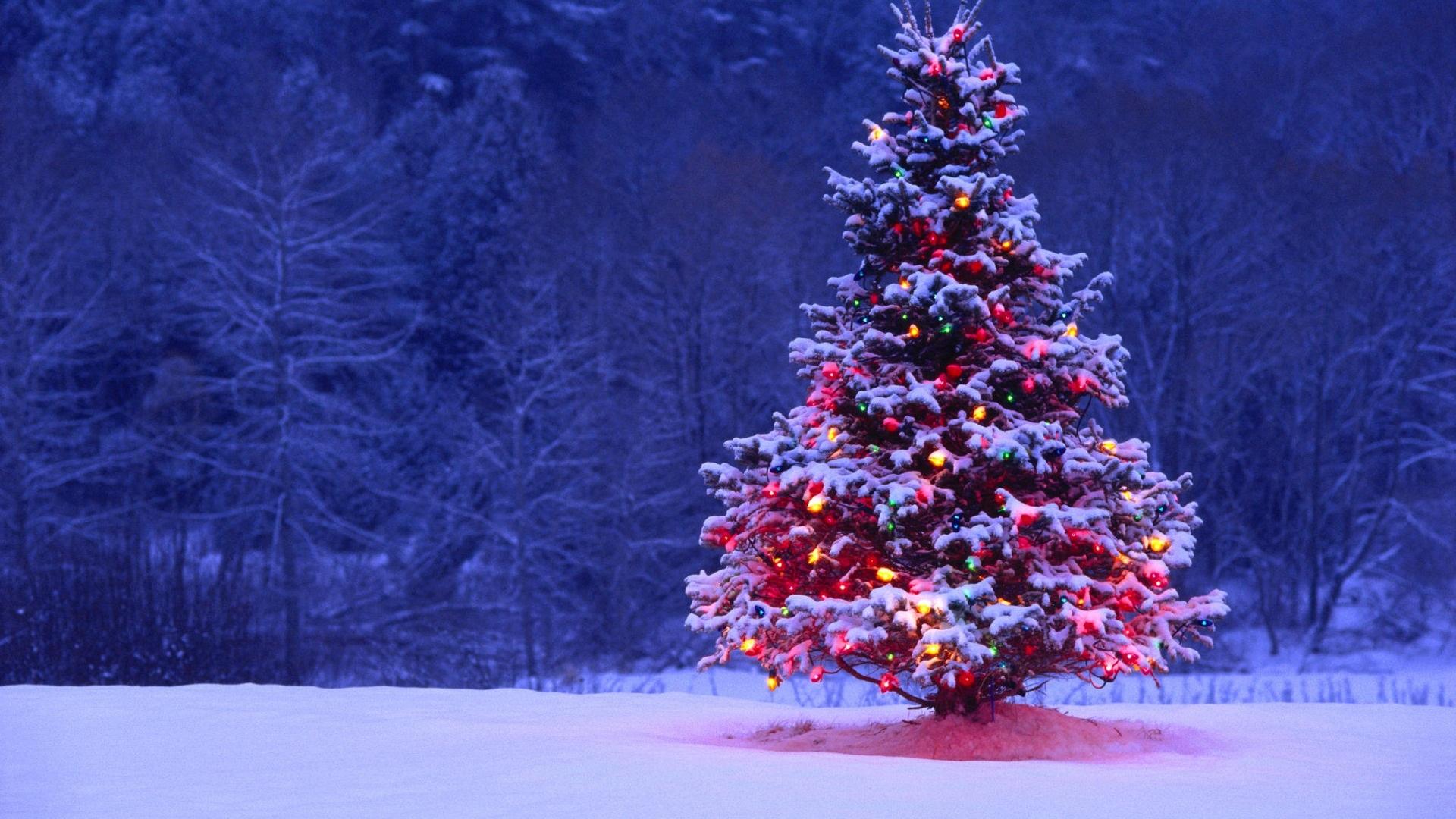 .CHRISTMAS domäner